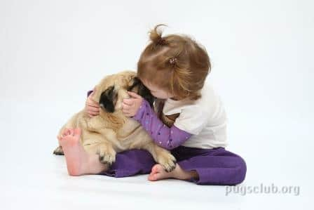 How to take care of Pugs