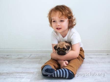 Pugs Breeders