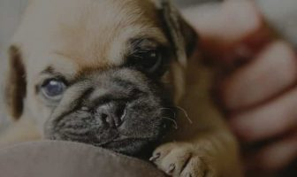 Pug Nose problems – 5 proven ways to avoid them