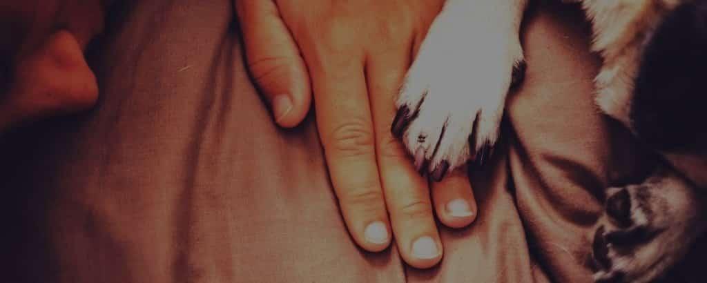 pug paws