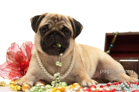 pug jewelry pug lovers