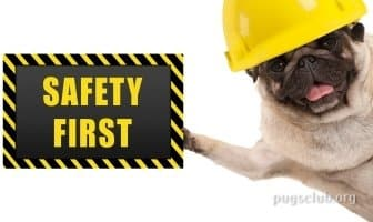 Best First Aid Kits for Pugs