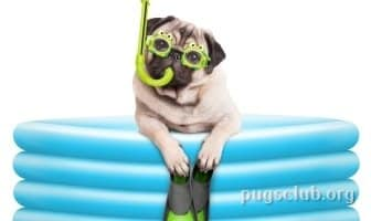 best dog pools pug