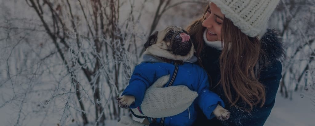 pug winter care tips